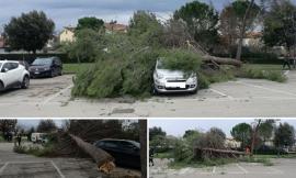 Alberi finiscono sopra le auto a Montecosaro (FOTO)
