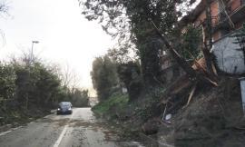San Severino, conta dei danni causati dal vento: alberi caduti e cartelli divelti. Chiuse alcune strade