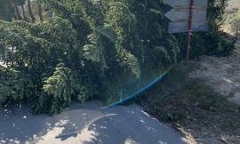 San Severino, aumenta la conta dei danni causati dal forte vento (FOTO)