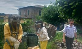 """San Severino, sciame di api """"invade"""" una casa terremotata: scattano le operazioni di recupero"""