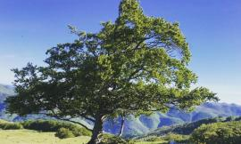 """""""Fiuminata passione verde"""", una Guida accompagnerà i turisti alla scoperta del territorio"""