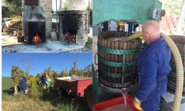 """Loro Piceno, """"Più è vecchio e più è buono"""": la Cantina Caonà svela i segreti del vino cotto (FOTO)"""