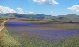 Parco dei Sibillini, boom di accessi al sito: cresce l'interesse dei turisti per l'area protetta