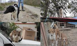 Montelupone, dopo i sequestri ancora animali senza cibo all'ex casa rifugio (FOTO)