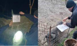 Fiuminata, scoperti dalla Forestale due allevamenti con suini non registrati: nei guai un romeno