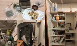 Arrestato rider della marijuana nell'entroterra maceratese: scoperta anche una serra in casa