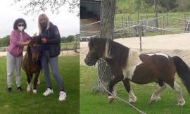 """Tragedia laghetto della Cimarella, spunta un lieto fine: il pony """"Furia"""" trova una nuova casa"""