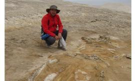 Svelata l'origine di uno dei più grandi giacimenti fossili di cetacei: geologo Unicam nel gruppo di ricerca