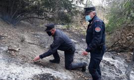 Mogliano, quasi un ettaro di bosco in fiamme: il responsabile è un 63enne, rischia fino a 5 anni di carcere