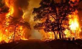 L'Italia brucia: incendi dolosi appiccati da criminali