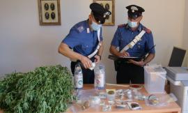Urbisaglia, serra di marijuana nei pressi dell'abitazione e laboratorio della droga: arrestato 35enne