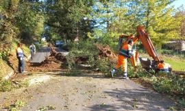 San Severino, frana sulla Comunale per Parolito: grossa quercia si abbatte sull'asfalto