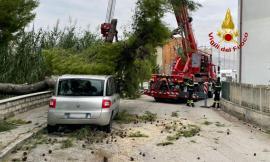 Un grosso albero cade su una Fiat Multipla in sosta: fortunatamente nessuno era a bordo