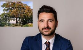 """Cinque querce di Cingoli riconosciute alberi monumentali: """"Nel 2022 tour per ammirarle"""""""