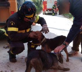 San Ginesio, due cani da caccia finiscono in un tubo di deflusso: intervengono i Vigili del Fuoco e li salvano