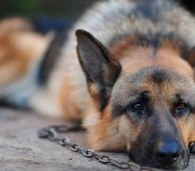 Cane chiuso in un recinto al freddo e sporcizia: condanna penale per il proprietario