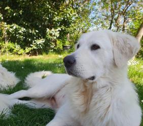 Cane smarrito a Loro Piceno: i proprietari chiedono aiuto per ritrovare Leila