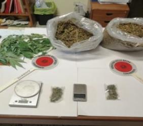 Percepisce il reddito di cittadinanza e spaccia marijuana: arrestato 58enne di Petriolo