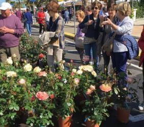 Civitanova riparte dai fiori: domenica 31 maggio torna la mostra mercato florovivaistica