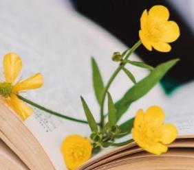 """Ripe San Ginesio è una """"Città che legge"""": al via una maratona di lettura per festeggiare il titolo"""