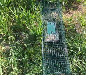 Morrovalle, sequestrata trappola illegale per la cattura di fauna selvatica