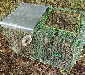 Urbisaglia, scoperta e sequestrata trappola per la cattura di animali selvatici