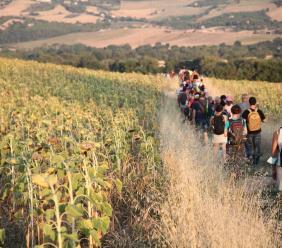 Alla riscoperta dell'Antica Via Romano-Lauretana: oltre 300 in marcia da Serravalle a Treia