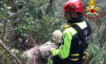 Matelica, cane disperso dopo una battuta di caccia: recuperato in un dirupo dai Vigili del Fuoco