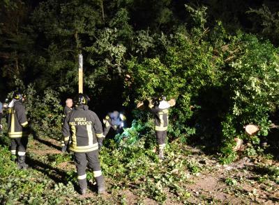Cadono due querce nel cuore della notte: vigili del fuoco al lavoro per quattro ore