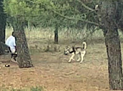 Macerata, cani senza guinzaglio: è strage di gatti al Parco di Collevario (FOTO)