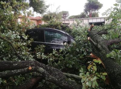 Temporale con caduta alberi: responsabilità del Comune per il risarcimento danni alle automobili
