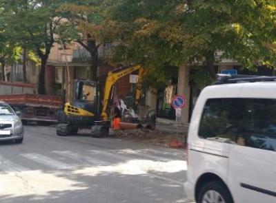 Macerata, abbattimento dei pini in viale Martiri della Libertà: i residenti non ci stanno