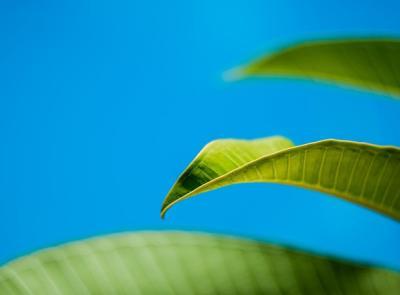 Fenomeno Green Marketing: perché le aziende farebbero meglio a puntare sull'ecosostenibilità
