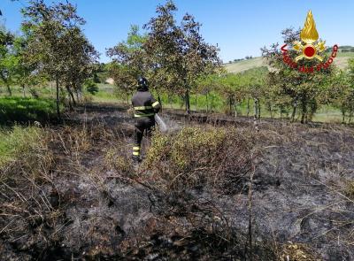 Macerata, fiamme in un campo a Villa Potenza: coinvolta un'area di 10000 metri quadrati (VIDEO)
