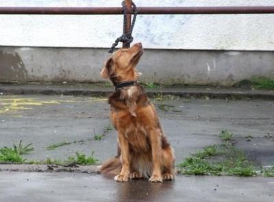 Cosa rischia chi abbandona il proprio cane: c'è la condanna penale