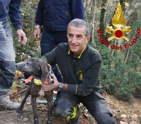 Esanatoglia, i vigili del fuoco salvano un cane rimasto intrappolato in una buca