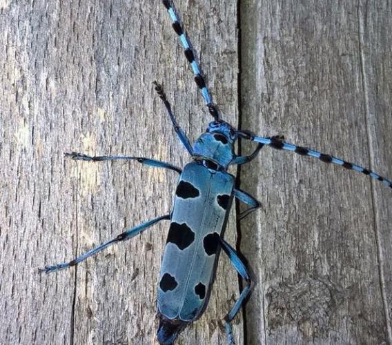 Parco dei Sibillini, un nuovo progetto per la tutela della biodiversità: sotto la lente gli insetti saproxilici