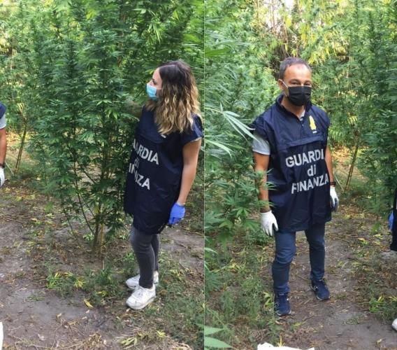 """Corridonia, vive in una roulotte e coltiva marijuana: la """"verde"""" pensione di un 69enne (VIDEO)"""