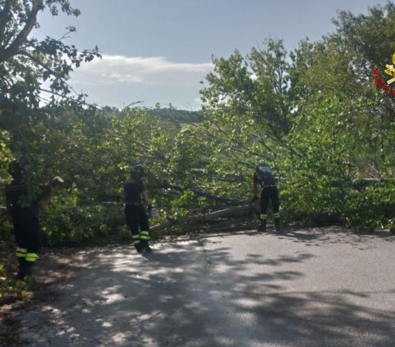 Forti raffiche di vento: vigili del fuoco al lavoro in provincia di Macerata e Ancona