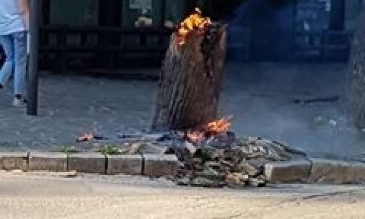 Tolentino, incendiato un albero davanti alla Bnl