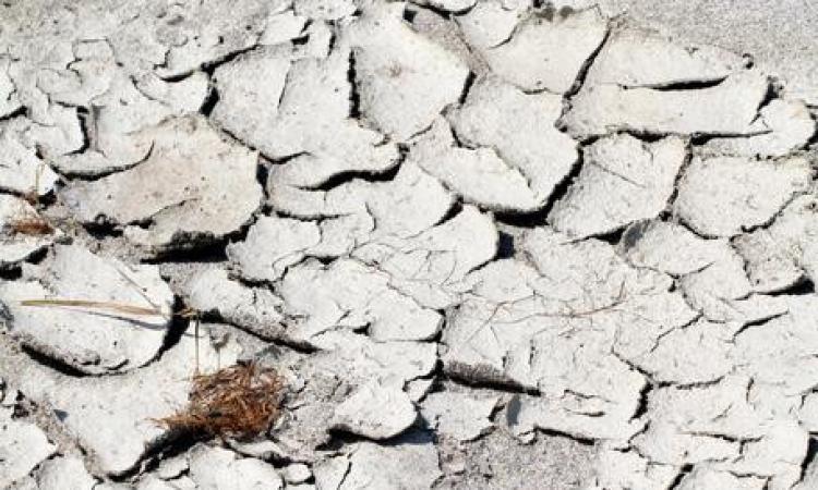 Allarme Coldiretti Marche, 30 milioni di danni all'agricoltura
