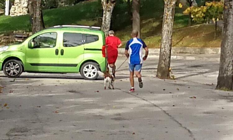 Di corsa con gli amici a quattro zampe: padroni e cani inseparabili anche per il jogging mattutino