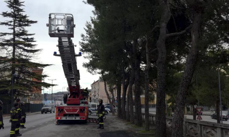 Tolentino, abbattuti due alberi pericolosi in via Nazionale