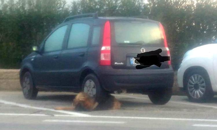 Choc a Civitanova, auto parcheggiata sopra il corpo di un cane