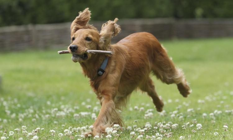 Civitanova, proteste per i troppi cani senza guinzaglio