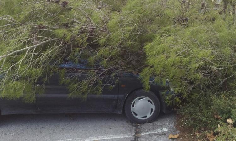 San Severino, vento forte abbatte alberi provocando danni alle auto in sosta