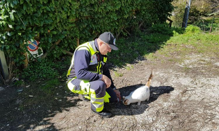 Continua il tour d'aiuti per gli animali terremotati