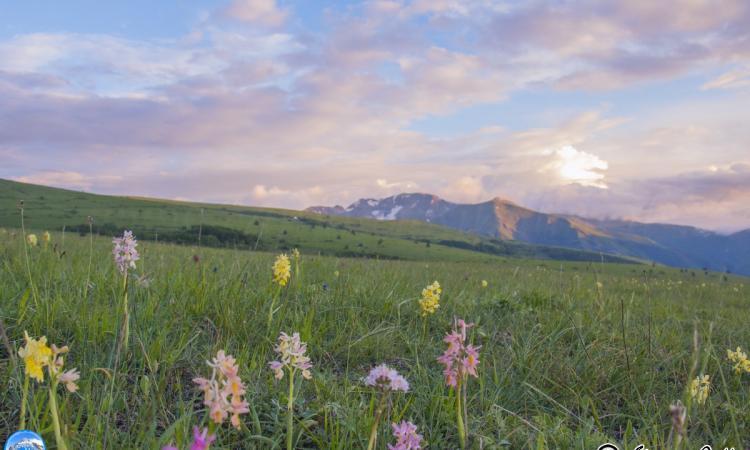 Fiabesco tramonto fra le orchidee e le fioriture di Ragnolo - Le foto