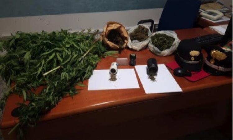 San Ginesio, coltivava marijuana nell'orto: denunciato artista di strada