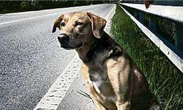 Maltrattatamento di animali: è punibile chi mette in pericolo l'incolumità dell'animale stesso